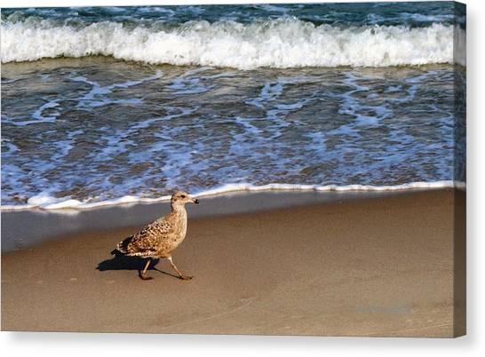 Sandpiper At Ortley Beach, Nj Canvas Print