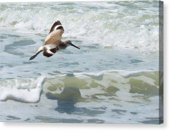 Sandpiper Flight Canvas Print