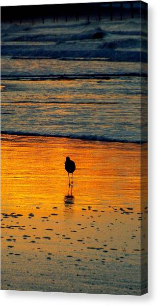 Sandpiper In Golden Dawn Surf Canvas Print