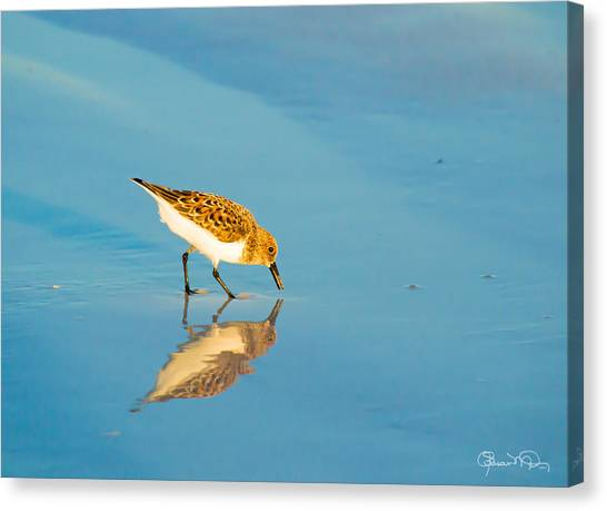 Sandpiper Mirror Canvas Print