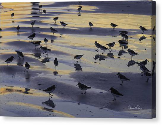 Sandpiper Sunset Convention Canvas Print