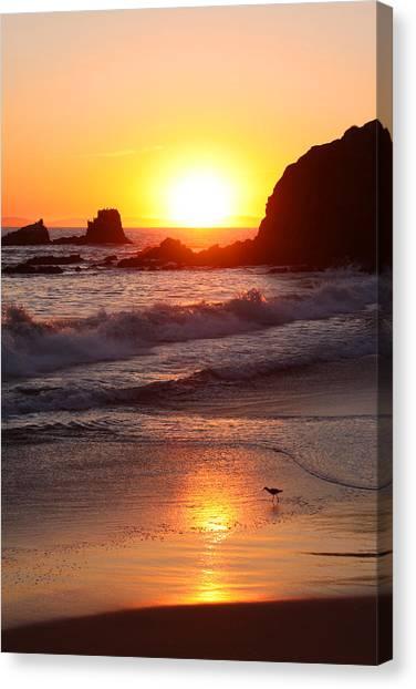 Sandpiper Sunset Canvas Print
