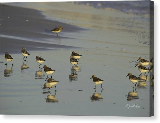 Sandpiper Sunset Reflection Canvas Print