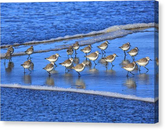 Sandpipers Canvas Print - Sandpiper Symmetry by Robert Bynum