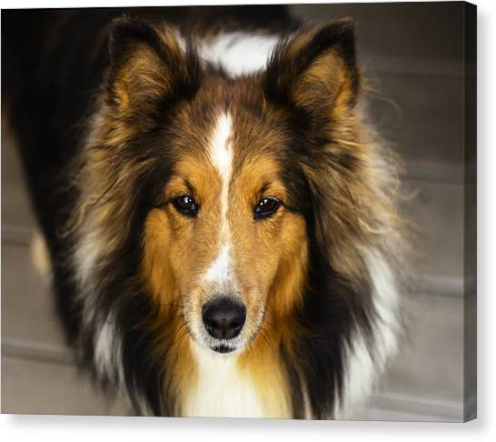 Sandy The Perfect Model Canvas Print
