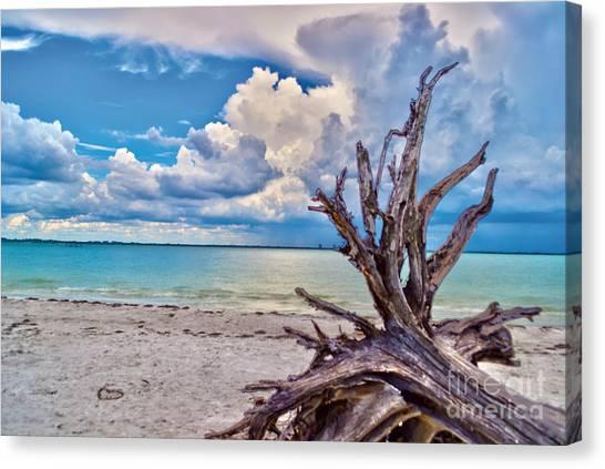 Sanibel Island Driftwood Canvas Print