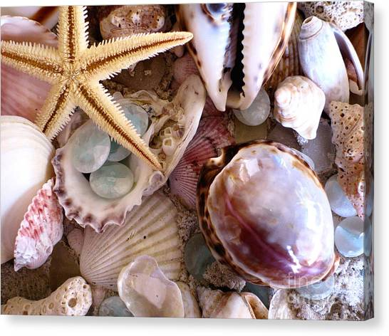 Ocean Life Canvas Print - Sanibel Shells by Colleen Kammerer