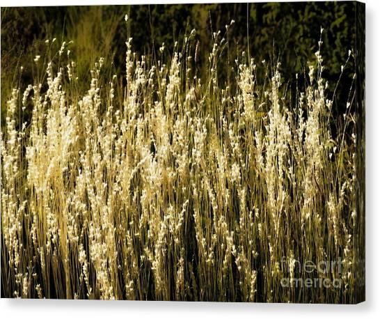 Santa Fe Grasses Canvas Print