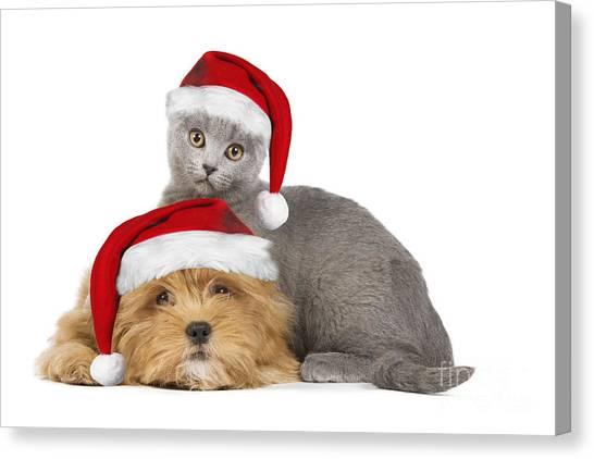 Chartreuxes Canvas Print - Santa Puppy & Kitten by Jean-Michel Labat