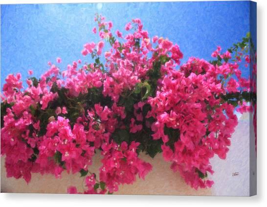 Santorini Flowers Grk1113 Canvas Print