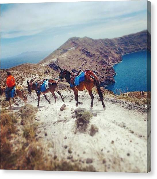 Donkeys Canvas Print - #santorini #greece #coast #coastal by Jen Goss