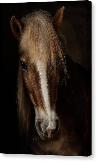 Horse Farms Canvas Print - Sapience by Martine Benezech