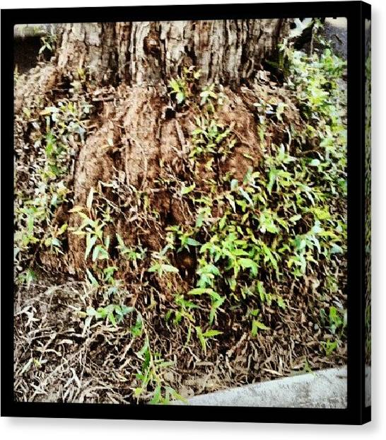 Rebirth Canvas Print - #saturdays #nature #trees #trunk #brown by Ragenangel -s