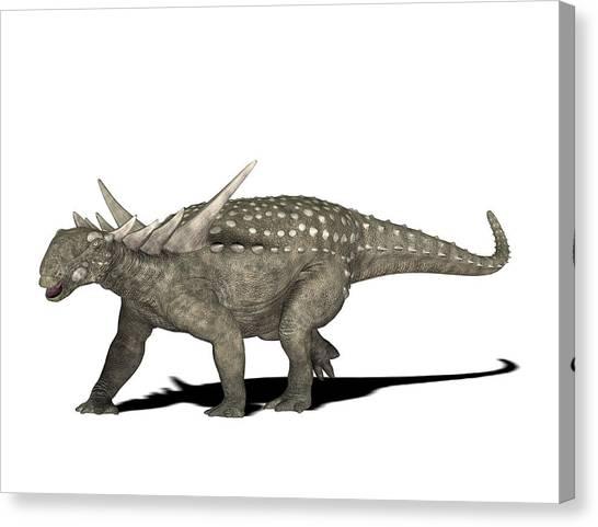 Sauropelta Dinosaur Canvas Print by Friedrich Saurer
