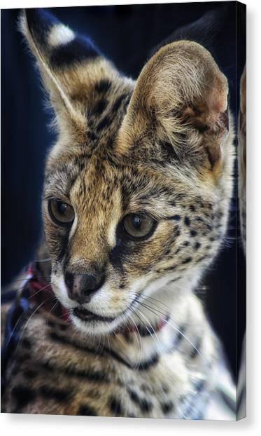 Savannah Jungle Cat Canvas Print