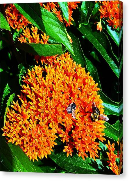 Save Our Bees Canvas Print