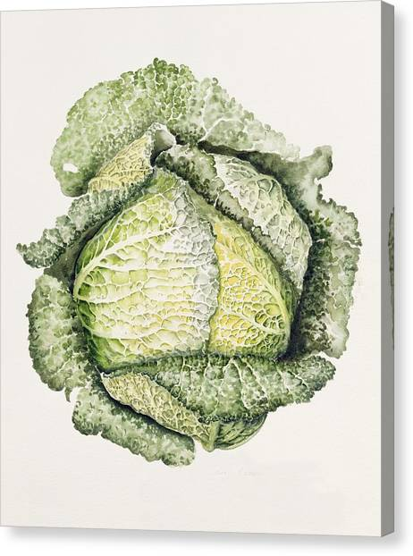 Cabbage Canvas Print - Savoy Cabbage  by Alison Cooper