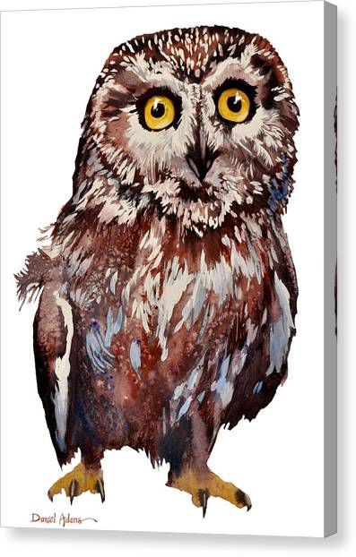 Da148 Saw Whet Owl Daniel Adams Canvas Print