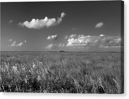 Sawgrass Prairie  Canvas Print by Andres LaBrada
