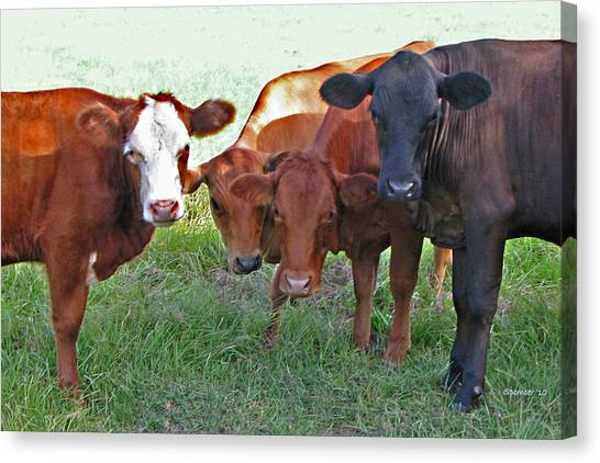 Say Moooooo 6377 Canvas Print