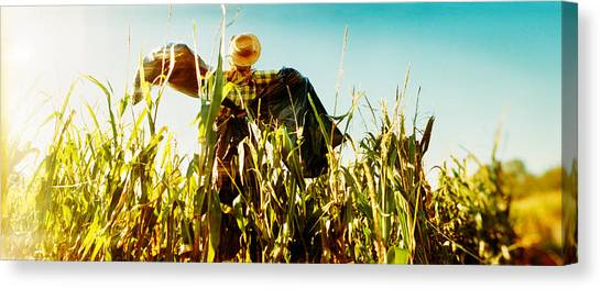 Corn Maze Canvas Print - Scarecrow In A Corn Field, Queens by Panoramic Images