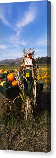Pumpkin Patch Canvas Print - Scarecrow In Pumpkin Patch, Half Moon by Panoramic Images