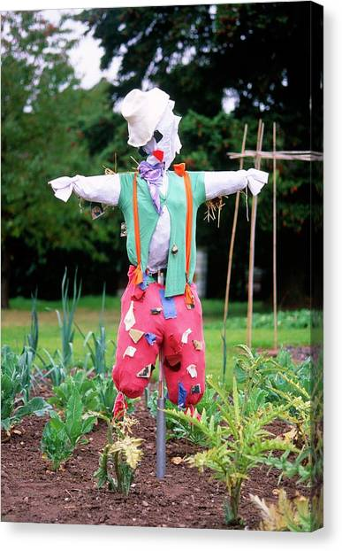 Scarecrows Canvas Print - Scarecrow by Tony Wood/science Photo Library