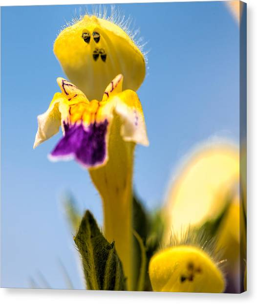 Scared Flower Canvas Print