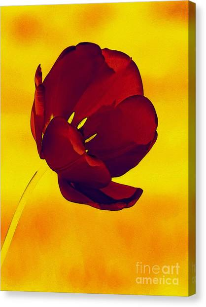 Scarlet Tulip At Sunset Canvas Print
