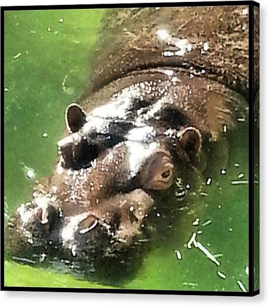 Hippos Canvas Print - Scenes From The Ark-- Hungry, Hungry by Kevin Previtali