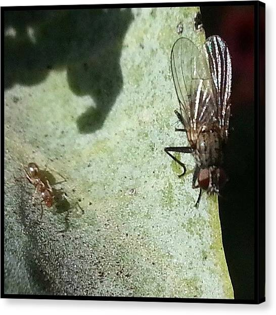 Ants Canvas Print - Scenes From The Trail-- Working The by Kevin Previtali