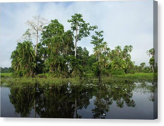 Congo River Canvas Print - Scenic Lekoli River, Congo by Pete Oxford