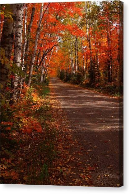 Scenic Maple Drive Canvas Print