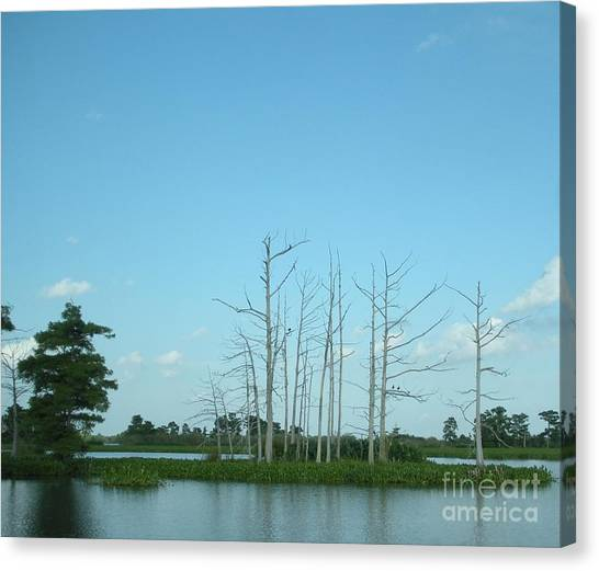 Atchafalaya Basin Canvas Print - Scenic Swamp Cypress Trees by Joseph Baril