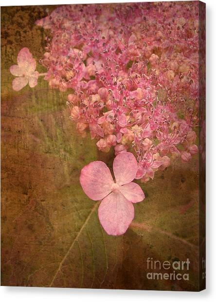 Scent Of Hydrangea Canvas Print