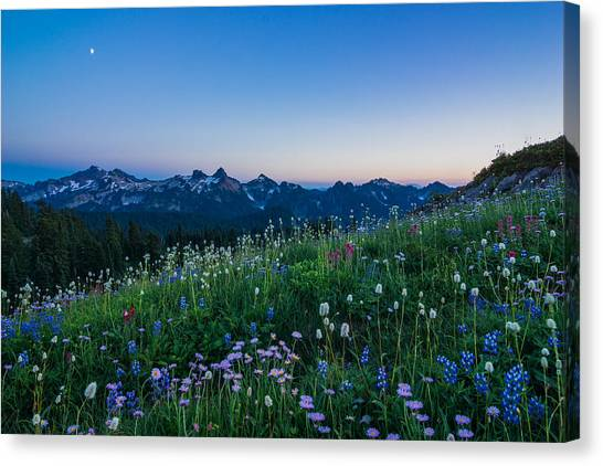 Scented Twilight Canvas Print