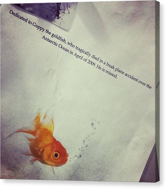 Goldfish Canvas Print - School Project That Has Lived On Our by Tim Chandler