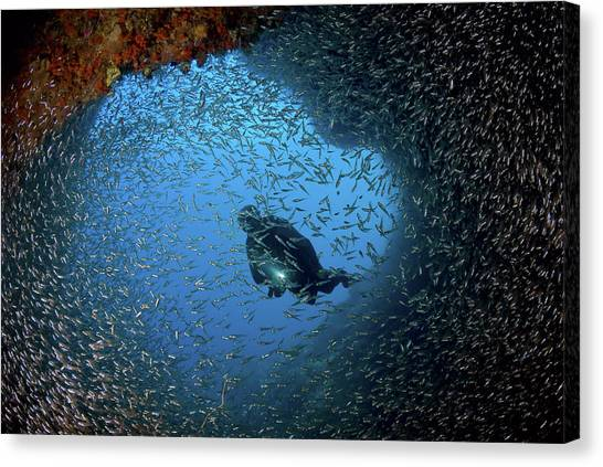 Underwater Caves Canvas Print - Schooling Baitfish And Diver At Cave by Jaynes Gallery