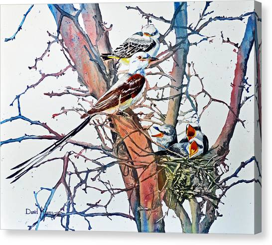 Da149 Scissortailed Flycatchers By Daniel Adams Canvas Print