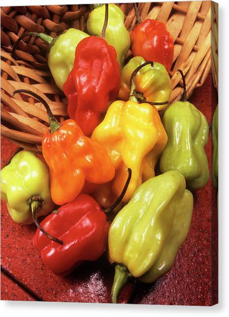 Scotch Canvas Print - Scotch Bonnet Peppers by Ray Lacey/science Photo Library