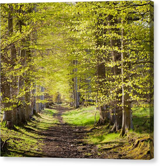 Scotland Grove Canvas Print