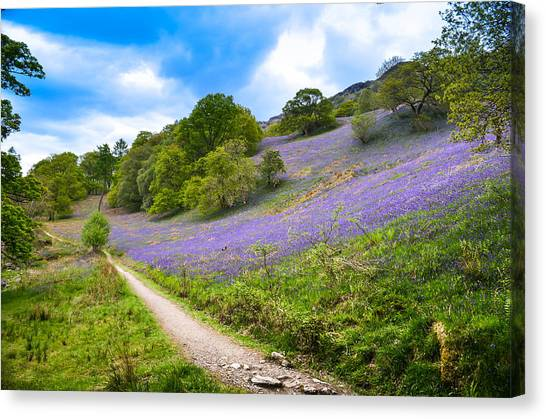 Scottish Bluebells On The Hillside Canvas Print by Alex Zorychta