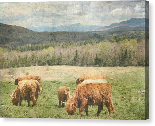 Scottish Highland Grazing  Canvas Print