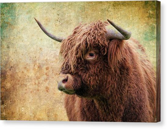 Canvas Print - Scottish Highland Steer by Steve McKinzie