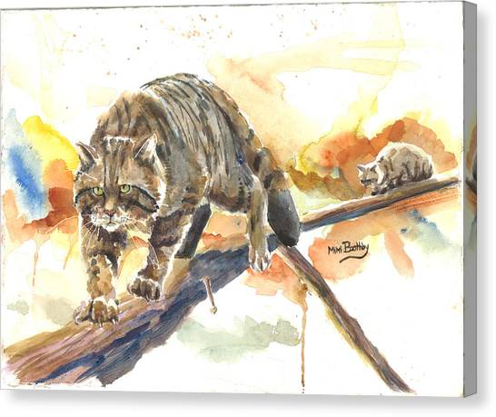 Scottish Wildcat Tom Canvas Print