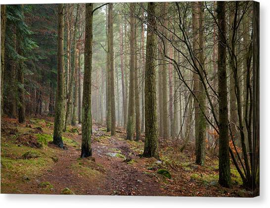 Scottish Woods Canvas Print