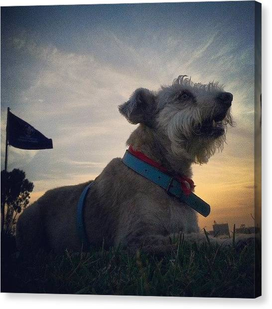Scouting Canvas Print - #scout #doggie At #sunset by Eric Herrera