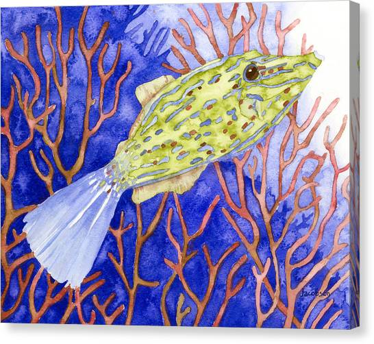 Scrawled Filefish Canvas Print