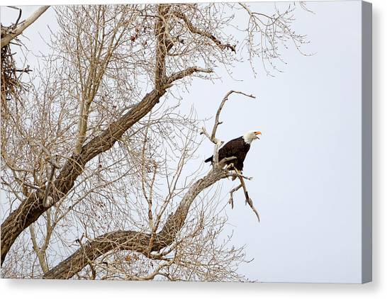Screamin' Eagle Canvas Print