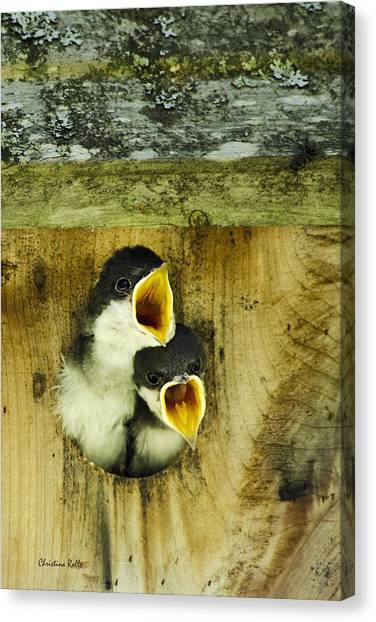 Screaming Hungry Canvas Print
